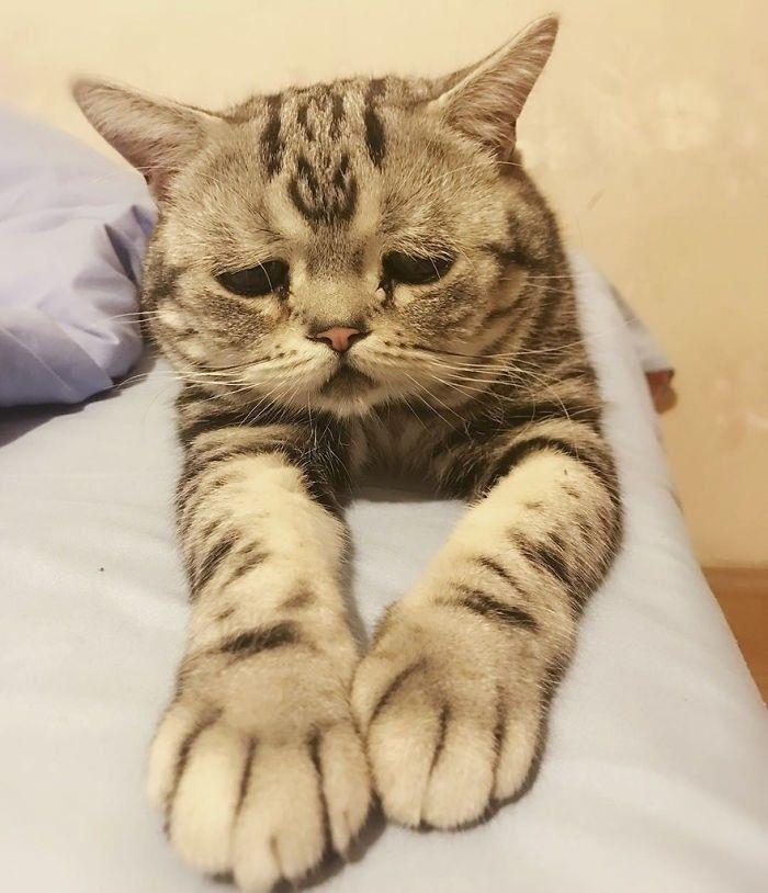 Download 92+  Gambar Kucing Paling Sedih Terlihat Keren