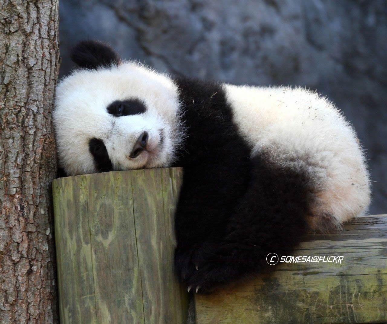 Hewan Bisa Kecapekan Lho 12 Pose Tidurnya Ini Super