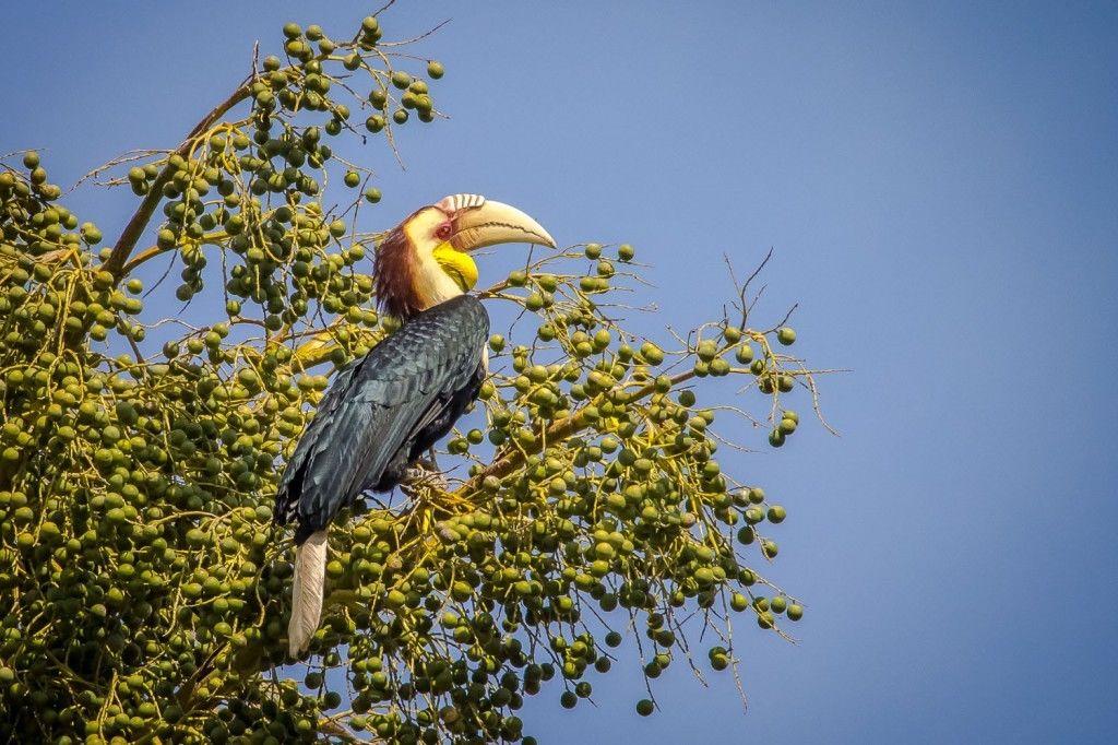 10 Hal Ini Bisa Kamu Lakukan Saat Berkunjung Ke Taman Nasional Baluran