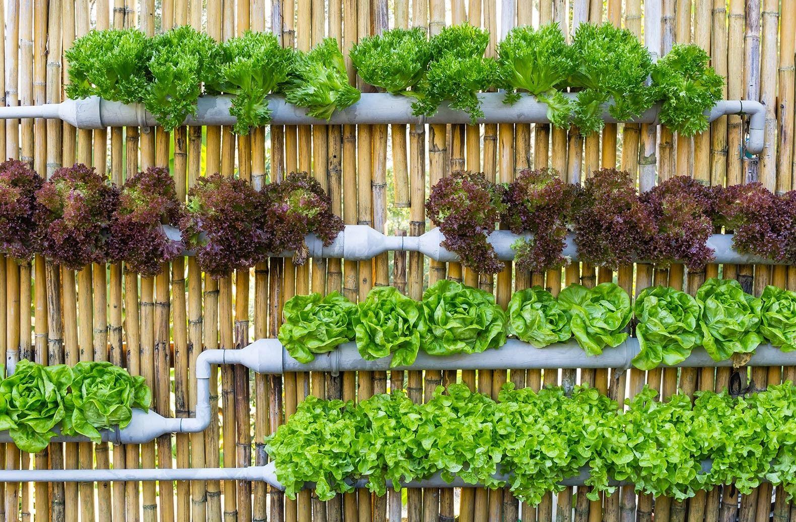 Cara Bertani Kreatif ala Millennial yang Wajib Kamu Coba di Rumah