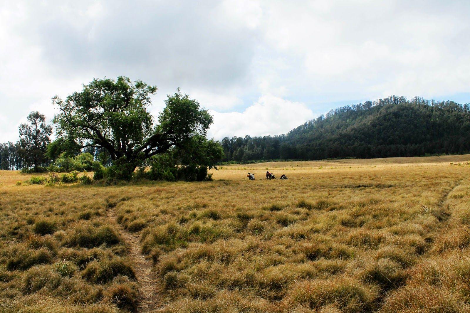9 Padang Savana Terindah di Jawa Timur, Bikin Sejuk Suasana Hatimu!