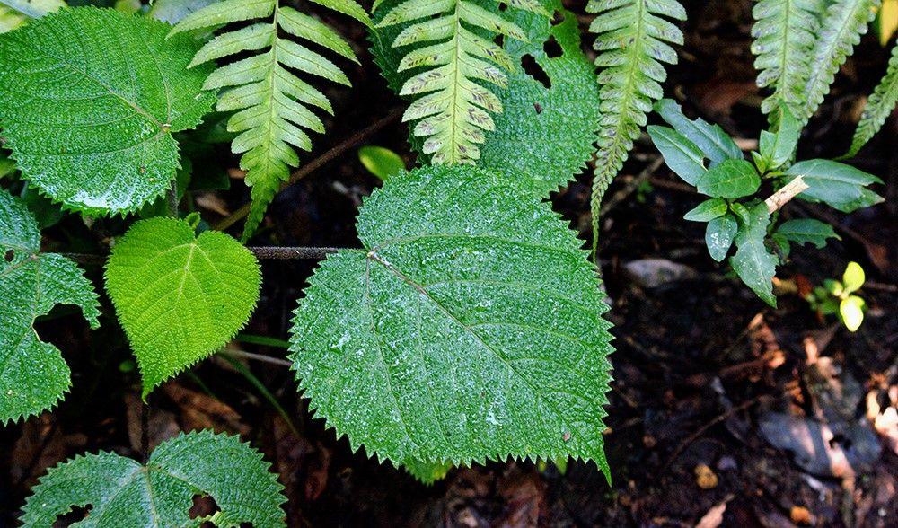 Hati-hati, 9 Tumbuhan ini Ternyata Berbahaya dan Mematikan