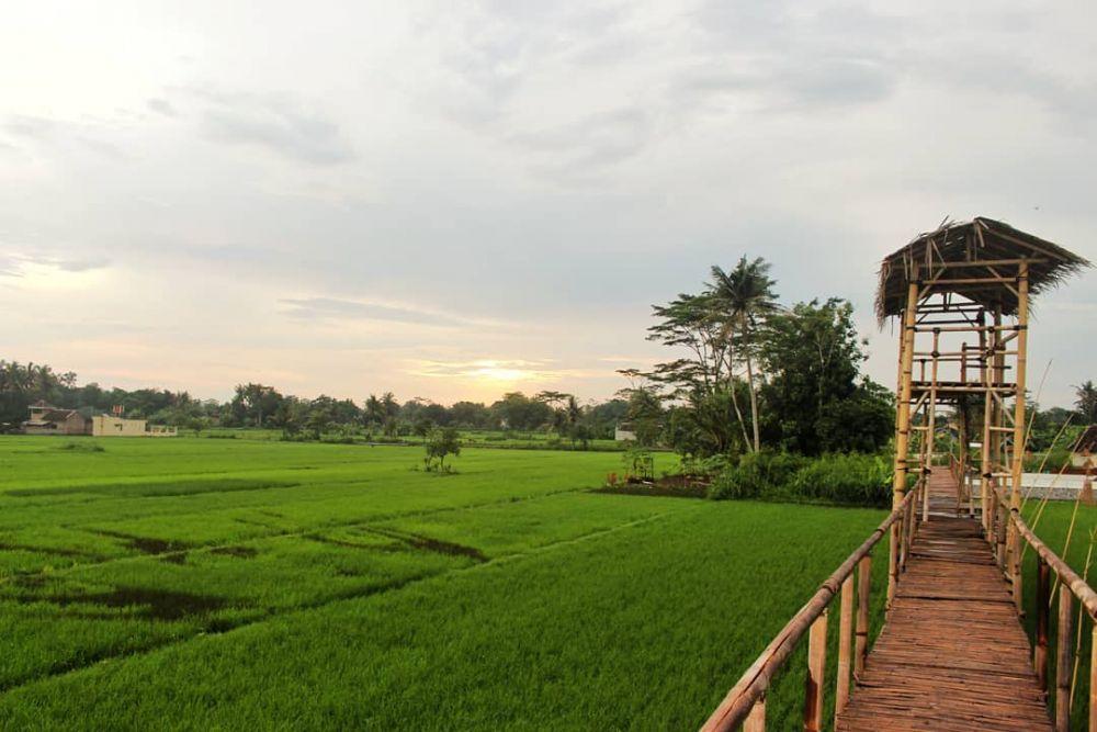 """Wisata """"Sawah Kreasi"""" di Yogyakarta yang Bikin Hati Adem, Sudah Coba?"""