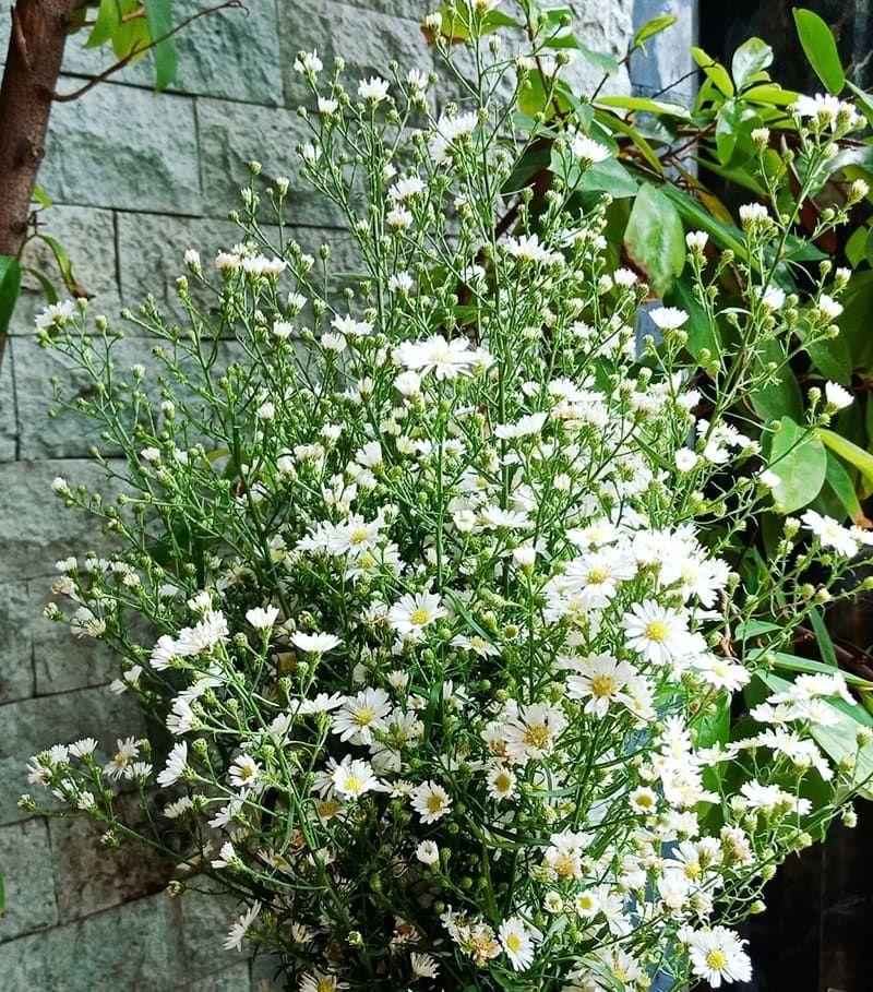 5 Bunga yang Bisa Atasi Stress Kamu, Yuk Tanam di Rumah!