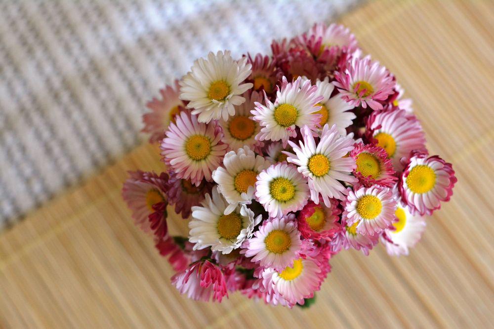 Selain Mawar, 6 Bunga Ini Lambangkan Cinta, Kesetiaan, dan Romantisme