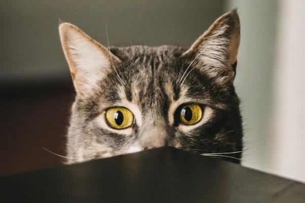 Jangan Dibiarkan, Ini Alasan Kenapa Kucingmu Mendadak Malas Makan