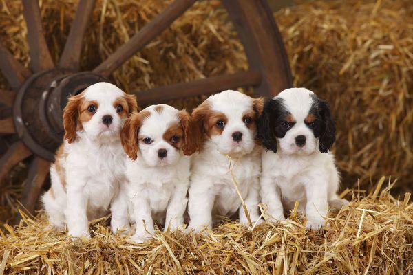 7 Ras Anjing yang Mudah Dirawat, Cocok Buat Para Pemula Nih