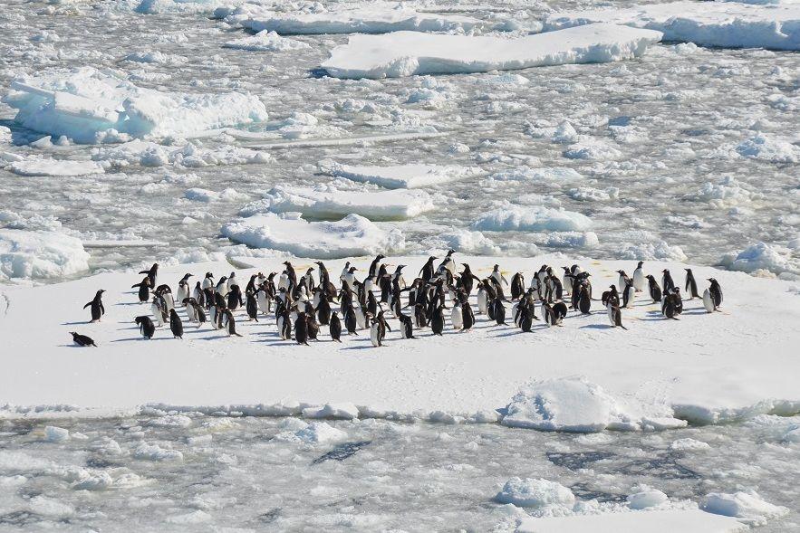 Hari Penguin Dunia, Ini 10 Fakta Penguin yang Wajib Kamu Tahu