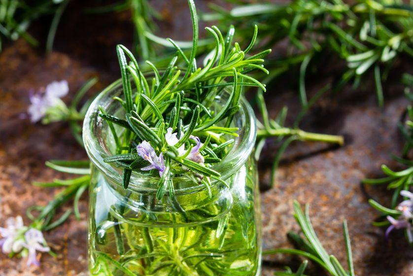 5 Fakta Unik Rosemary, Tidak Hanya Ampuh Mengusir Nyamuk, lho!