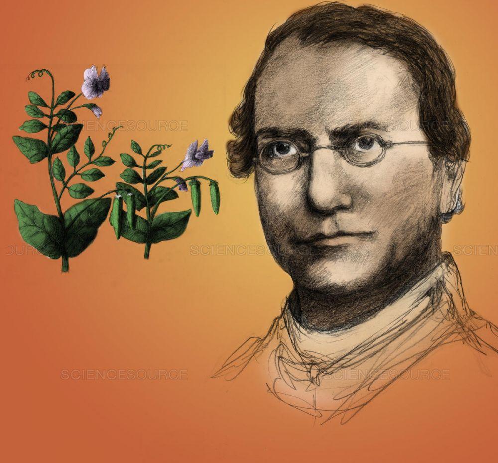 Gregor Mendel: Petani, Biarawan, dan Bapak Genetika Modern