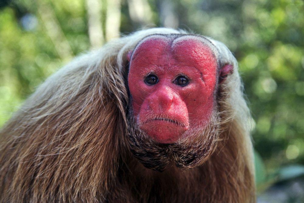 6 Primata dengan Penampilan Terunik, Ada yang Warna-warni!