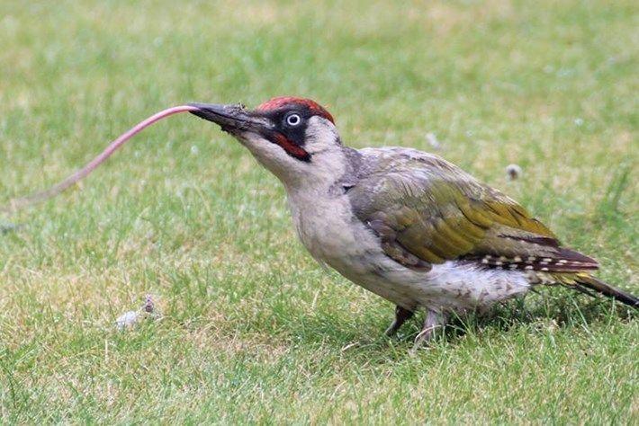 54 Gambar Hewan Burung Pelatuk HD