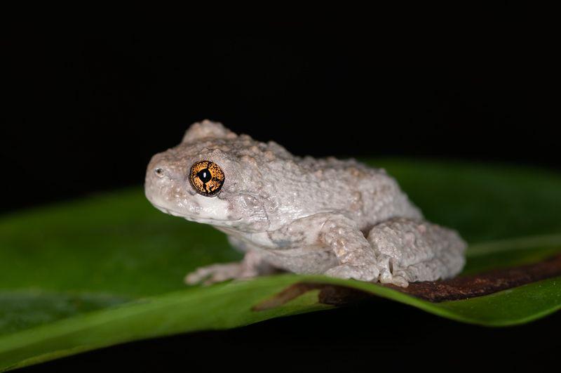 5 Hewan Endemik di Pulau Hispaniola yang Wajib Kamu Ketahui