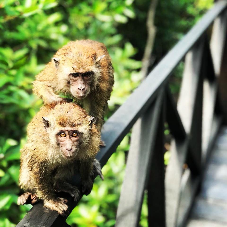 5 Fakta Hutan Bakau Langsa, Cocok Jadi Destinasi Ekoturisme