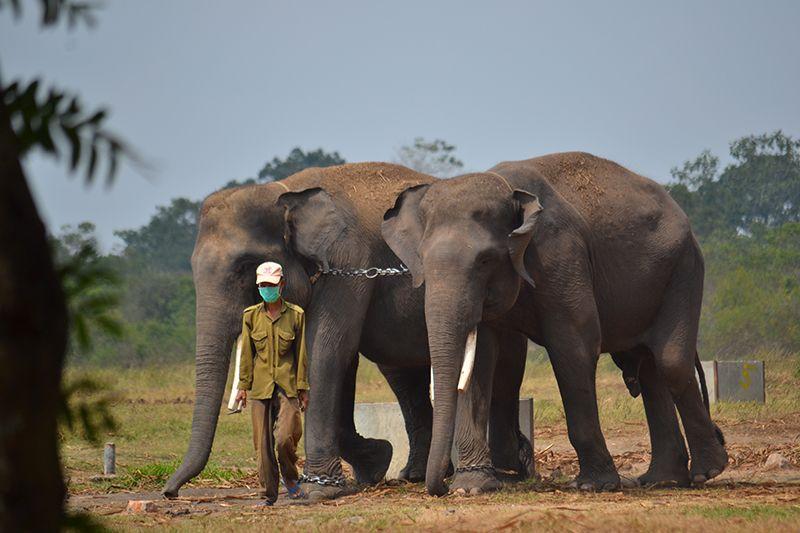 8 Sensasi Piknik ke Way Kambas, Tak Cuma Berfoto dengan Gajah Lucu
