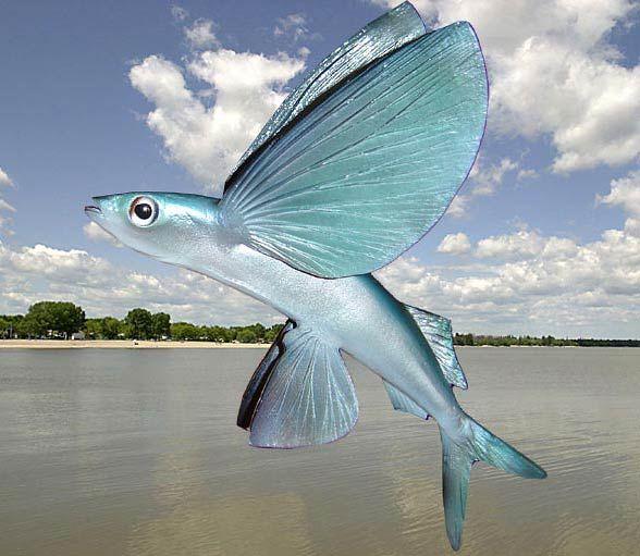 6 Fakta Menarik Torani, Ikan yang Bisa Terbang Sejauh 200 Meter!