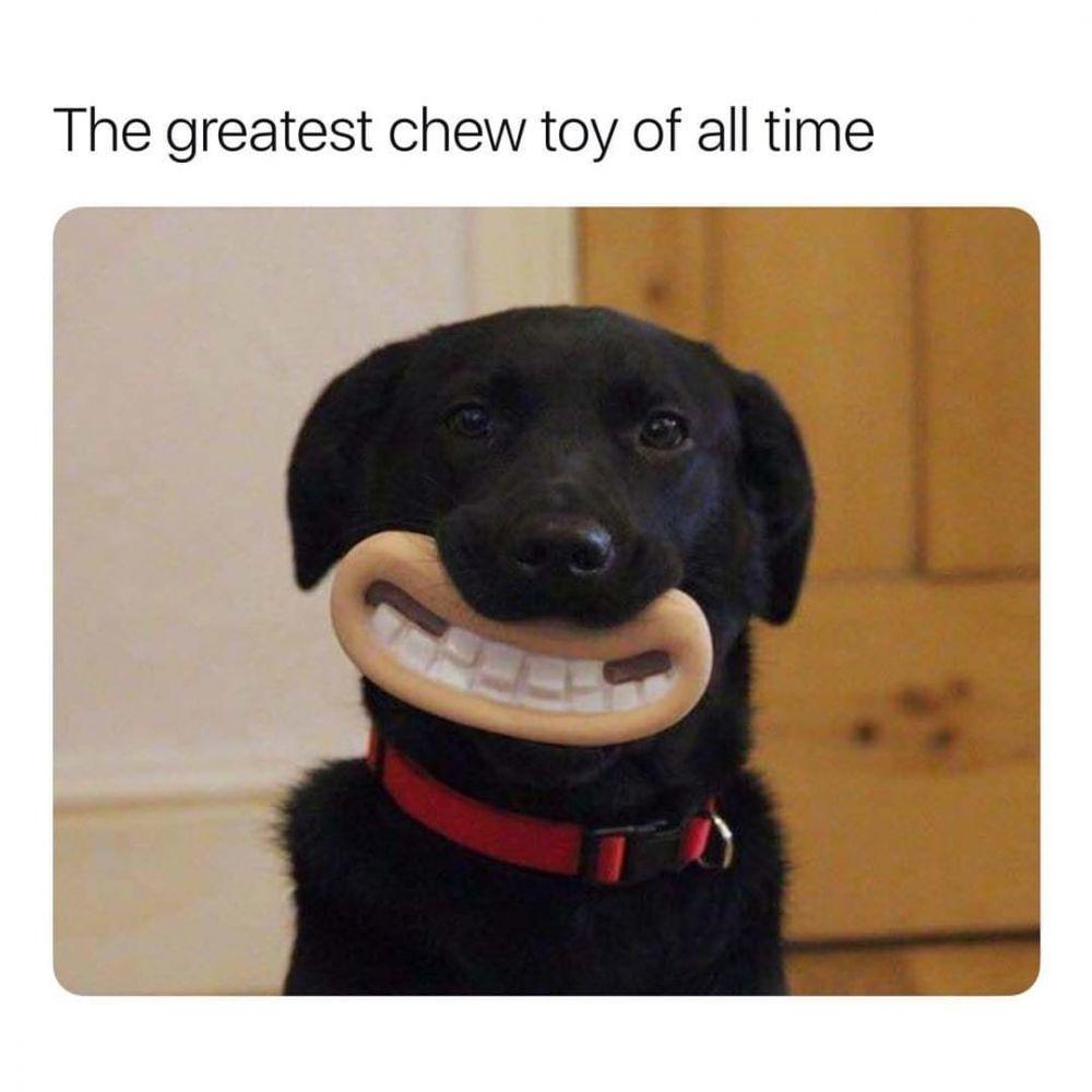 10 Foto Ekspresi Anjing Paling Konyol, Bikin Ketawa Terpingkal-pingkal