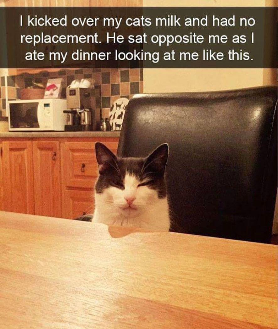9 Foto Kucing Saat Marah, Pura-pura Garang tapi Tetap Menggemaskan!