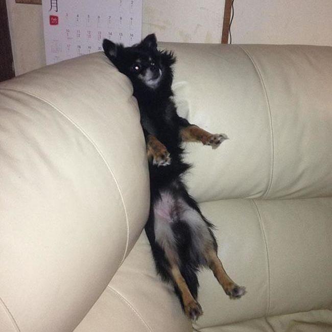 11 Foto Kocak Anjing yang Terperangkap, Gak Kalah Konyol dari Kucing!