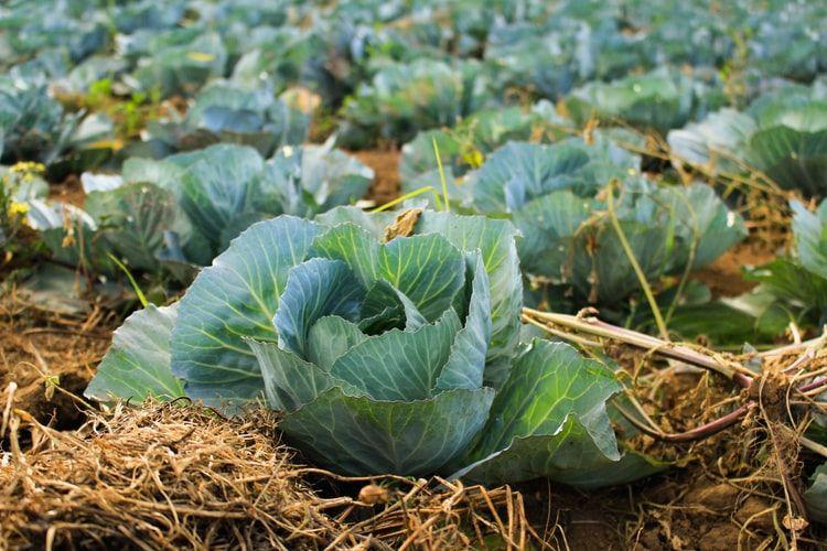 Suka Makan Sayur? Waspada 5 Bahaya Pestisida yang Nempel di Sayurmu!
