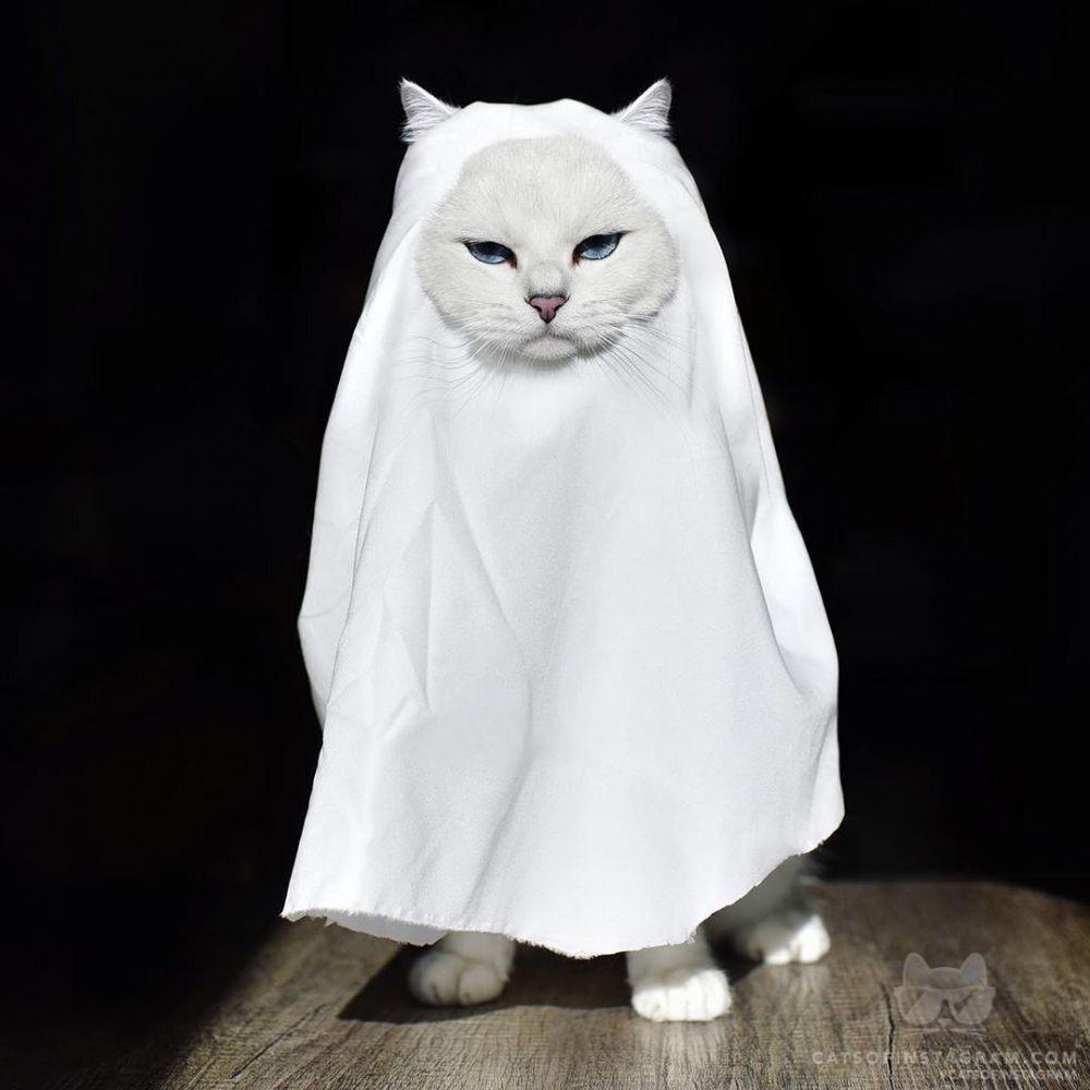 12 Bukti Kucing Itu Hobi Menghakimi, Mending Dituruti Sebelum Dicakar!