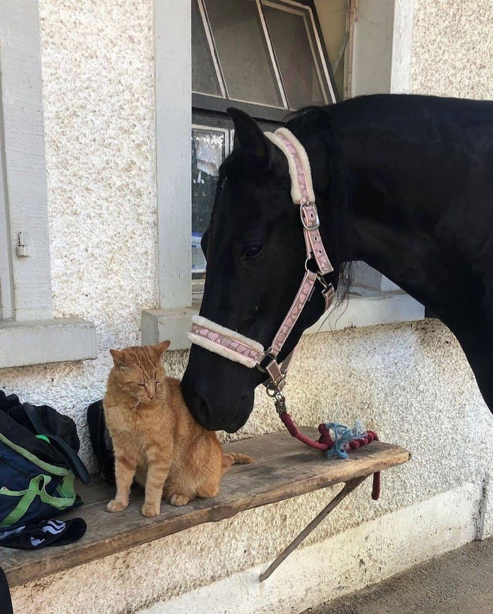 10 Kelucuan Kucing Saat Bersama Hewan Lain, Ada Alpaka Hingga Anjing!