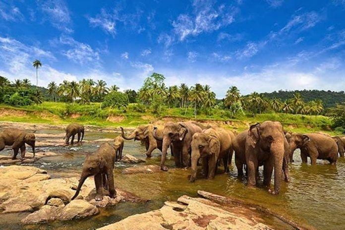 Jarang Dilirik, Ini 5 Tempat Wisata Lampung yang Tidak Kalah Indah!