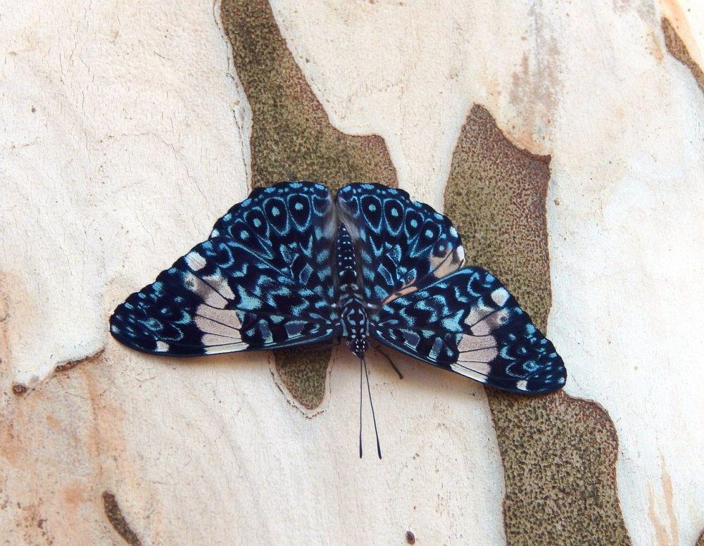10 Potret Indahnya Kupu-kupu Biru dengan Beragam Corak Unik!