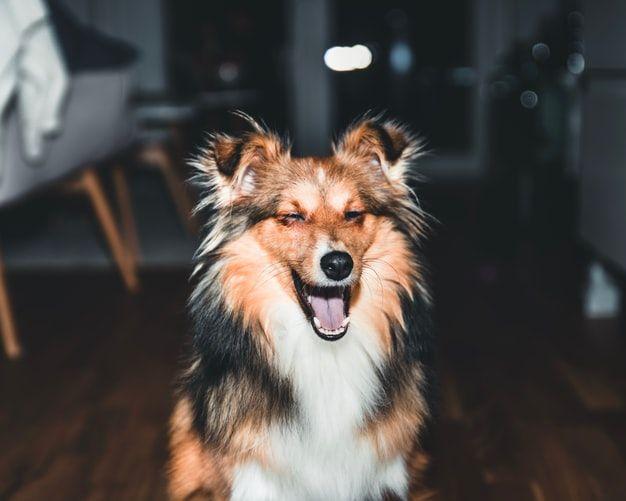 Nyaman Dipeluk, 9 Ras Anjing Ini Punya Bulu Lebat yang Super Fluffy