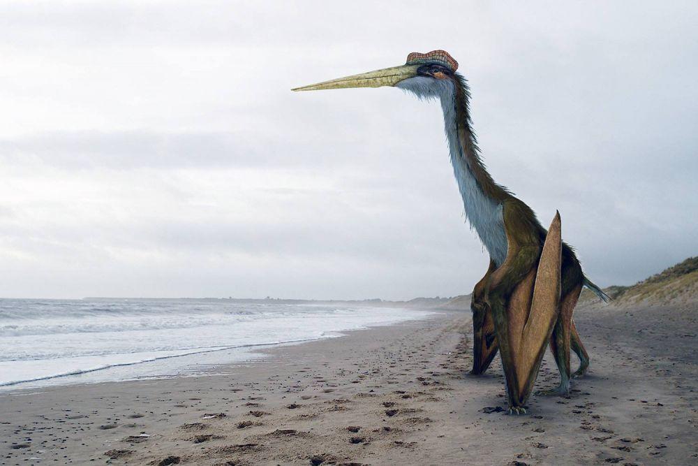 5 Fakta Quetzalcoatlus, Hewan Terbang Terbesar yang Pernah Hidup