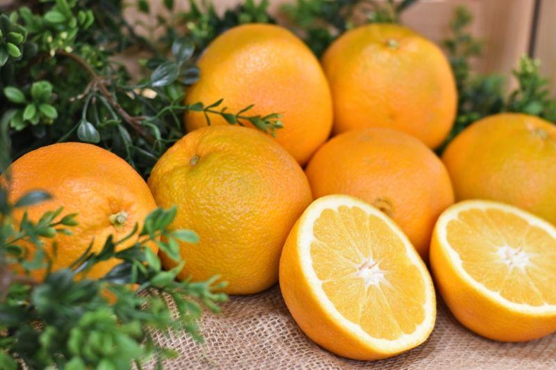 5 Jenis Jeruk Terbaik di Dunia yang Cocok Dijadikan Jus, Kaya Vitamin!