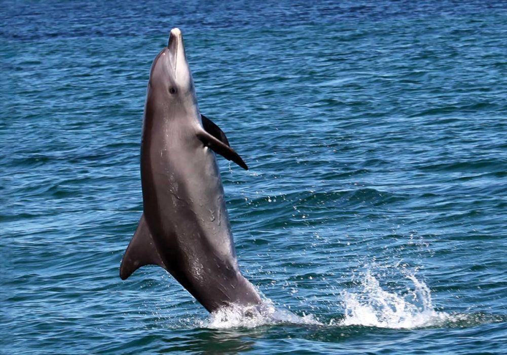 6 Hewan yang Mampu Berjalan di Atas Air, dari Kadal hingga Burung