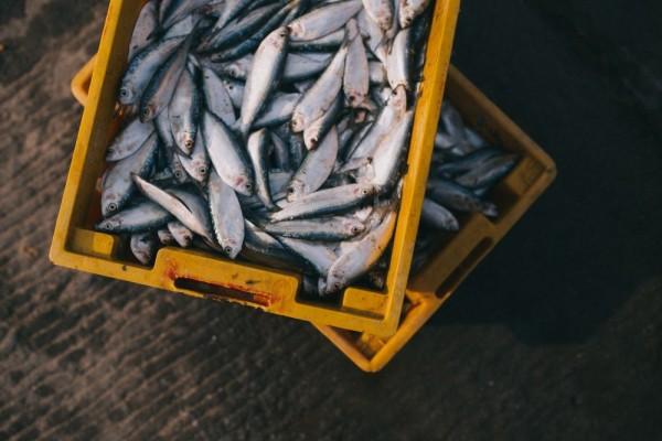 7 Tips Memilih Ikan Segar untuk Mendapatkan Cita Rasa Masakan Lezat