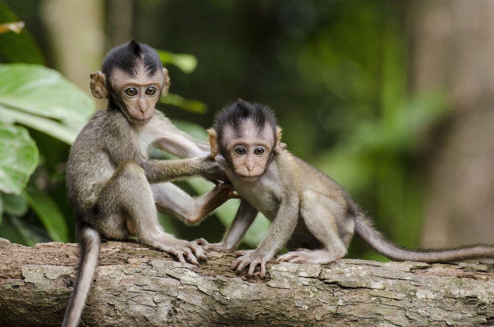 Sering Dikira Sama, Ternyata Ini 6 Perbedaan Monyet dan Kera