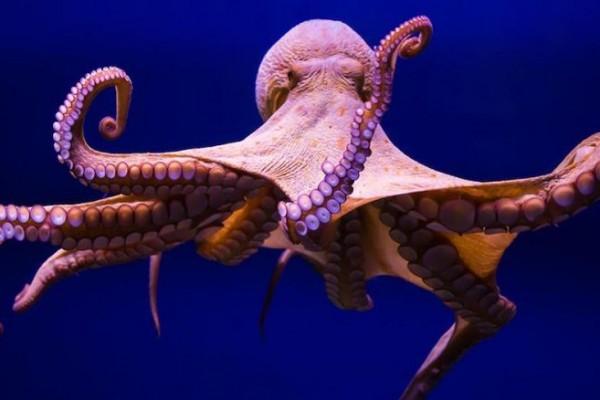 7 Fakta Menakjubkan tentang Berbagai Hewan Laut, Kamu Sudah Tahu?