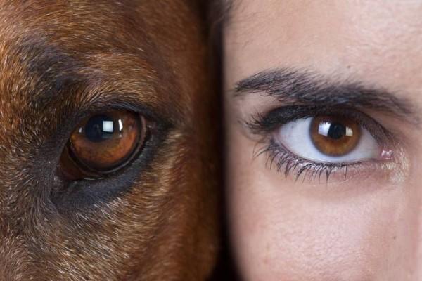 Bagaimana 5 Spesies Hewan Ini Memandang Manusia? Sains Menjawabnya