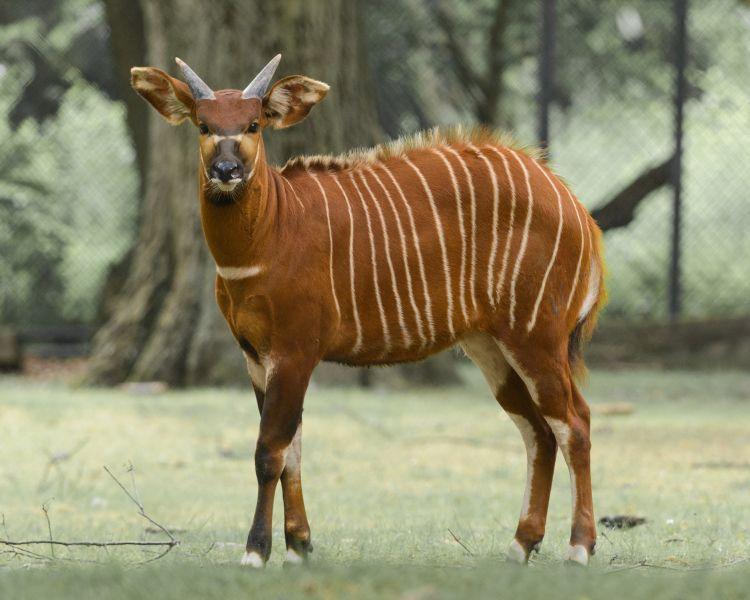 Bukan Hanya Zebra dan Harimau, 5 Hewan Ini juga Bertubuh Belang