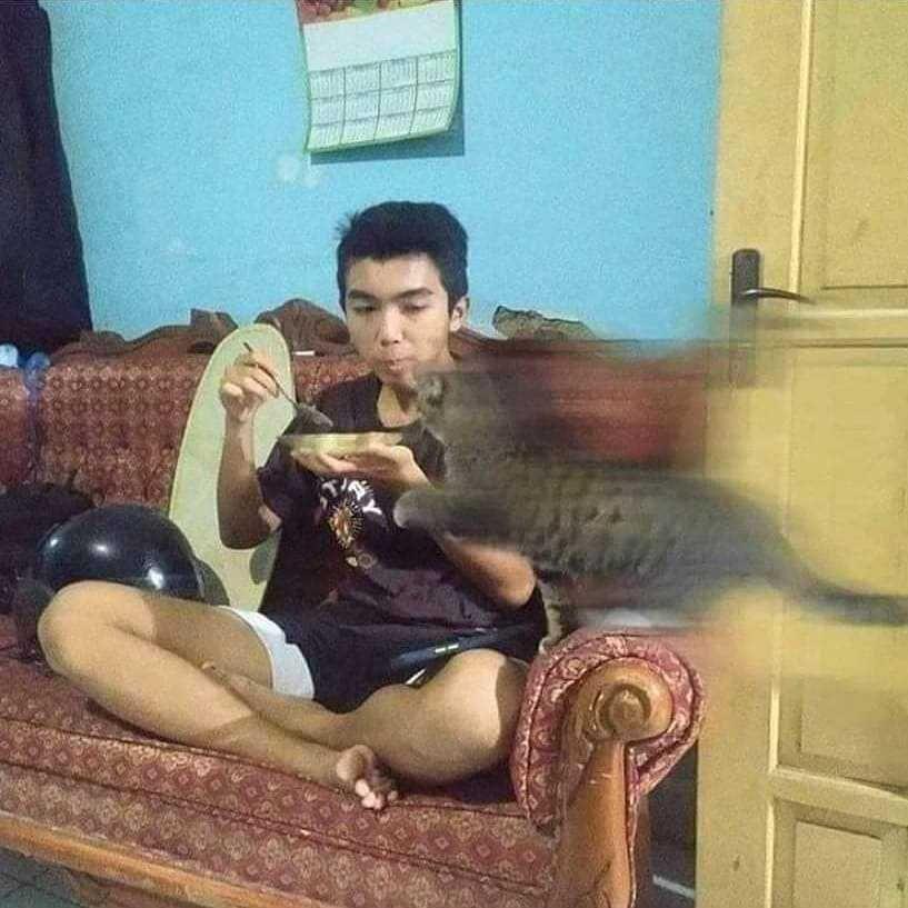 10 Momen Saat Kucing dan Manusia Berbagi Makanan, Kocak Banget!