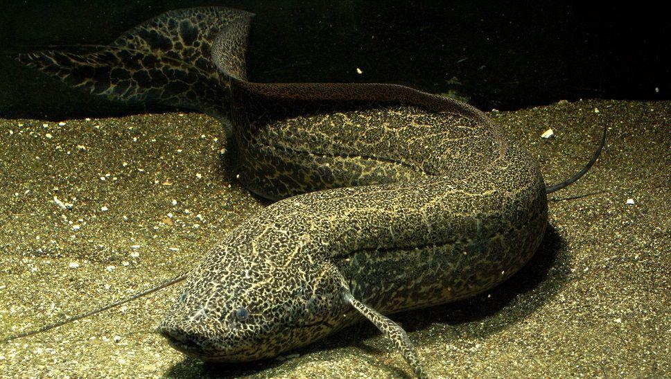 7 Fakta Unik Pernapasan Hewan, Ada Ikan yang Bernapas dengan Paru-Paru
