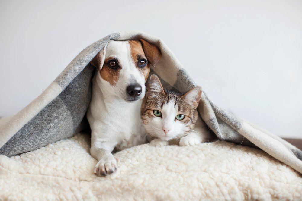Fakta Ilmiah: Meluruskan 7 Kesalahpahaman tentang Anjing dan Kucing