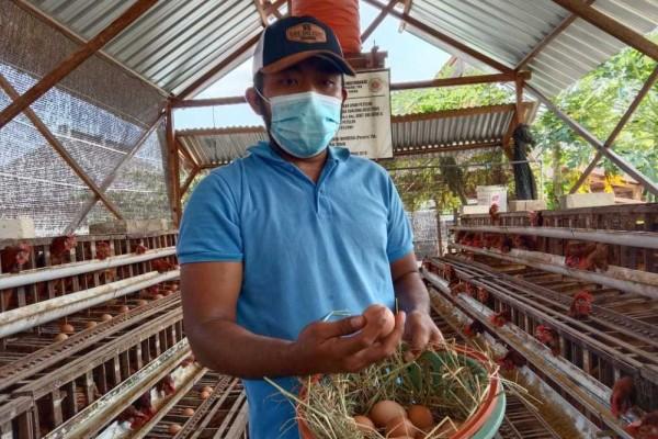 Harga Telur Ayam Masih Anjlok Nih Pak Jokowi!