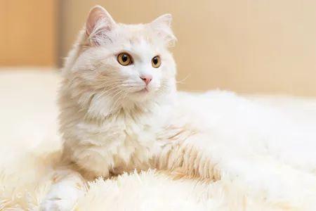 Kucing 101: 5 Ras yang Berperilaku Layaknya Anjing, Cerdas Banget