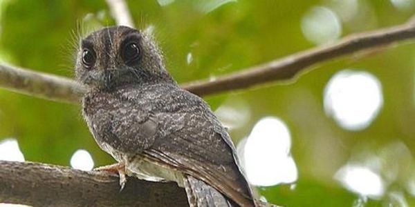 Nyaris Punah, 7 Spesies Hewan Ini Jumlahnya Kurang dari 100 Ekor