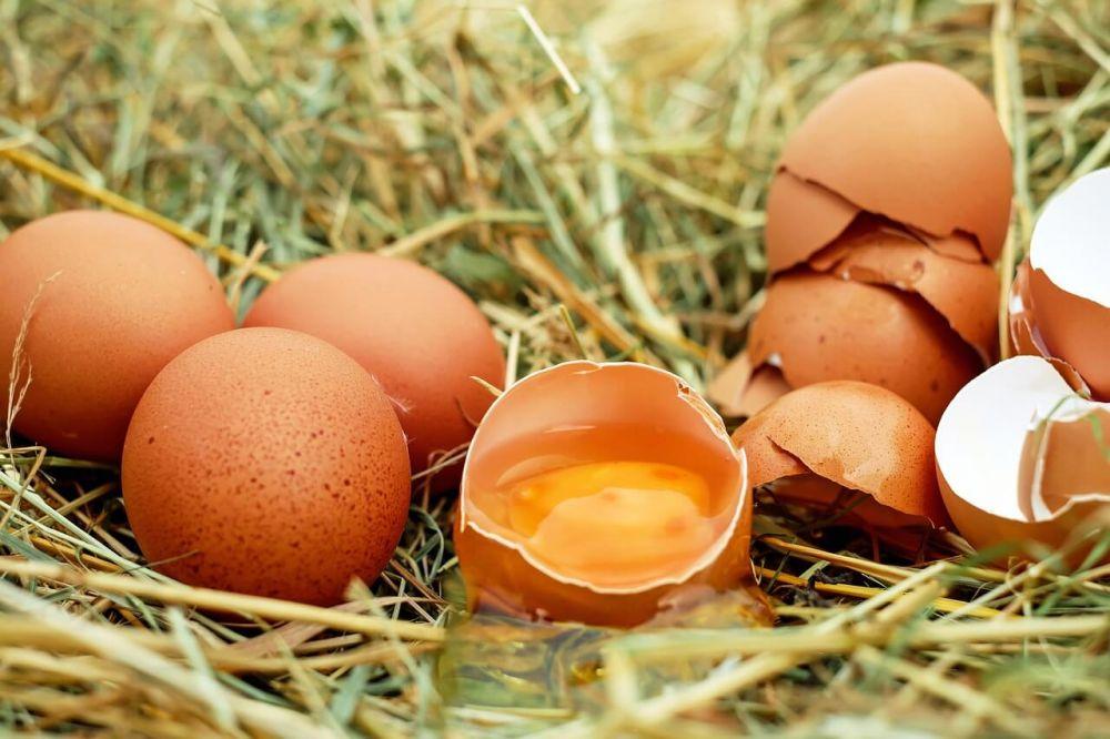 Tangkal Penyakit, 5 Jenis Makanan yang Ampuh Tingkatkan Imun Tubuh