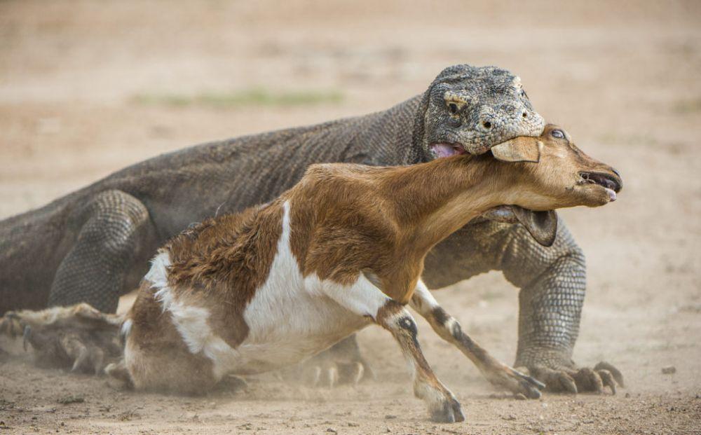 Kejam, 5 Hewan Predator Ini Suka Makan Mangsanya Hidup-hidup!