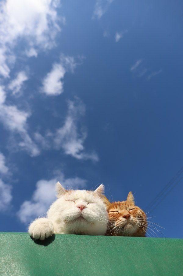 Ngakak! Ini 9 Kelakuan Kucing yang Bikin Jomlo Langsung Overthinking