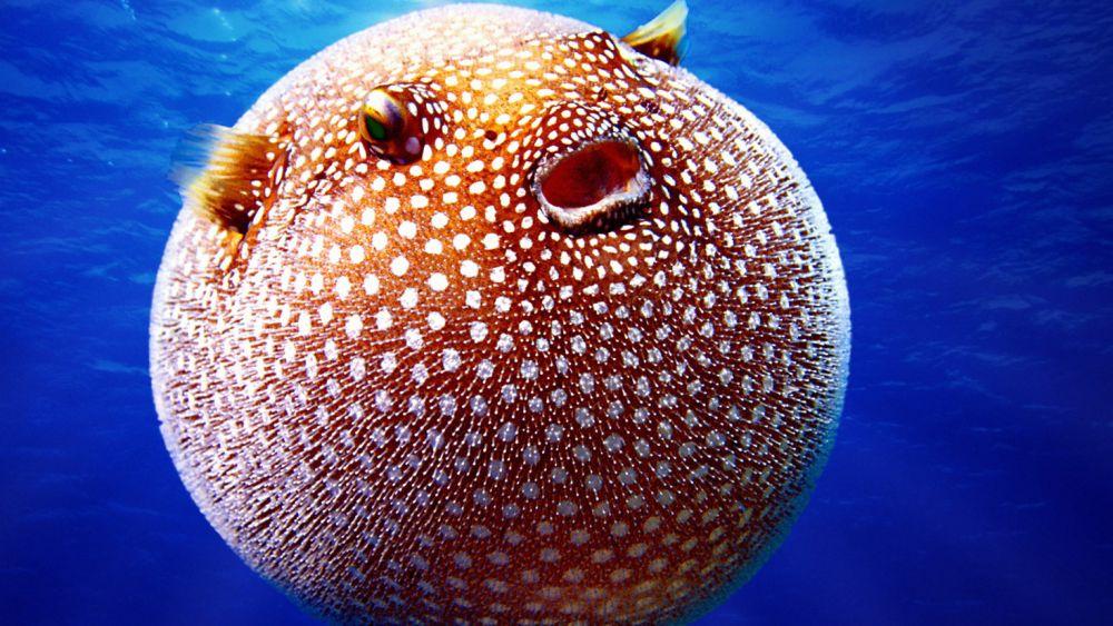 5 Jenis Ikan yang Berbahaya untuk Dikonsumsi, Apa Saja?