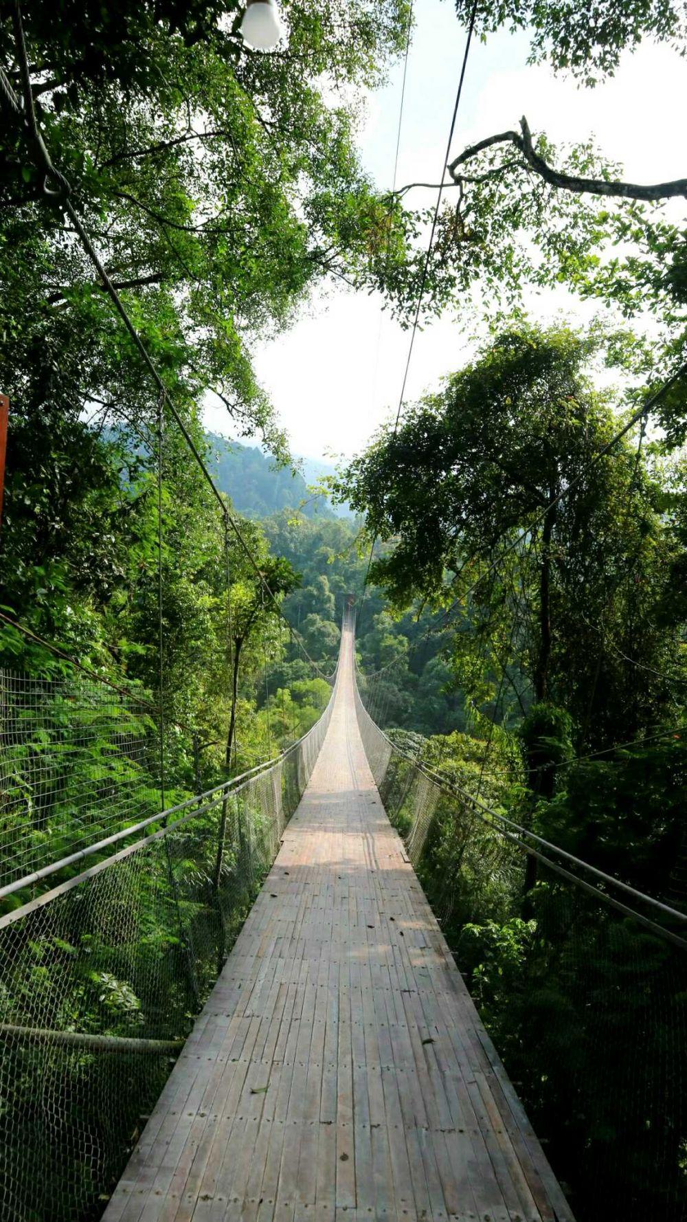 7 Keelokan Situ Gunung, Pesona Wisata Alam Sukabumi yang Asri