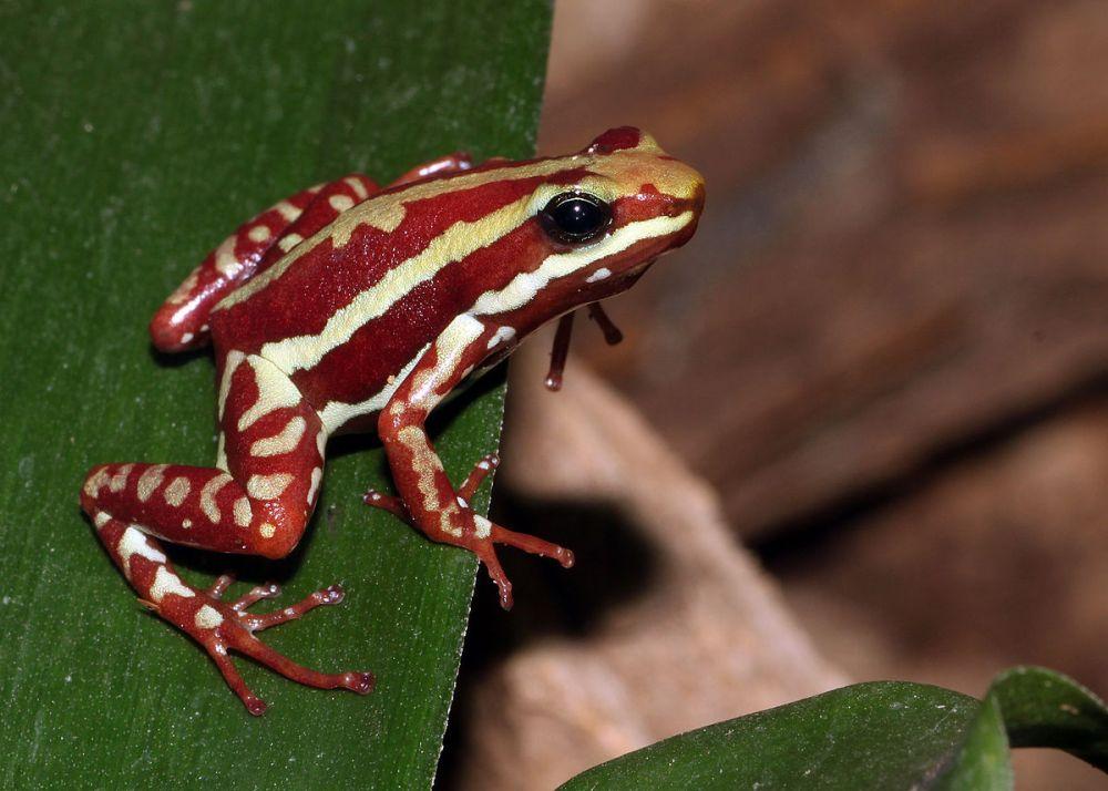 Jangan Dekat-Dekat, 20 Spesies Hewan Ini Punya Toksin Paling Mematikan