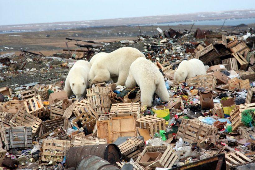 Menyedihkan! Ini 15 Potret tentang Dampak Pemanasan Global